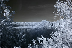IMG_2822 (Dan Correia) Tags: amherst swamp clouds shadows infrared canonef35mmf2 15fav topv111 topv333 510fav topv555 topv777 topv999 1025fav topv1111 topv2222