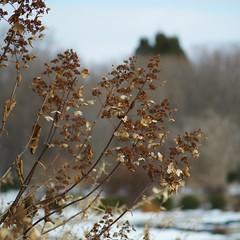 winter garden (humbletree) Tags: ohlbrich gardens madisonwisconsin winter a7rii