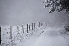 keep walking (Wöwwesch) Tags: winter snow snowstorm white way landscape tree fence sony sonyalpha ilce6000