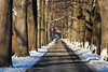 Snowy Lane (SunnyDazzled) Tags: snow skylands newjersey park land gravel trees line shadows afternoon winter sunlight cold