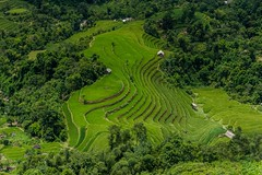 Výlet na motorce do Hoang Su Phi (zcesty) Tags: vietnam22 terasa rýže pole vietnam dosvěta hàgiang vn
