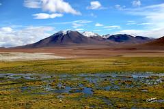 Altiplano Chile (Cristian Barahona M. ( cabm )) Tags: chile altplano andes cordillera atacama san pedro