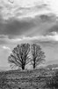 Drama (ErrorByPixel) Tags: landscape pentaxart pentaxk5 errorbypixel black white monochrome bw bnw tree clouds trees nature