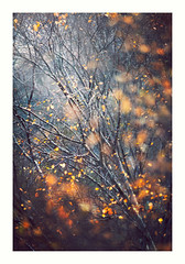 Somewhere in Wales 19 Nov 2017 (Matthew Dartford) Tags: backlight bokeh bokehlicious depth fog forest happisburgh tree wales woodland