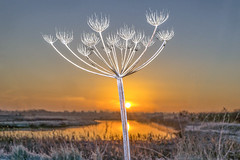 Frosty Sunrise (adrians_art) Tags: cow parsley plants winter frost ice sunrise dawn sky clouds water rivers wet reflections silhouettes shadows red yellow blue gold black white light dark patterns nature