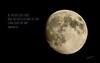 Daily Haiku: Luna 043/365 (James Milstid) Tags: dailyhaiku haiku haiga poetry jemhaiku luna moon lunar