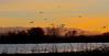 Incoming Flight -- Sandhill Cranes (Grus canadensis); Ladd Gordon Waterfowl Complex, Bernado, NM [Lou Feltz] (deserttoad) Tags: bird wildbird nature water behavior crane waterfowl newmexico flight sunset reflection preserve silhouette