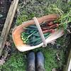 Winter Veg Harvest (The Garden Smallholder) Tags: vegetables garden wellyboots gardentrug harvest homegrown growyourown growfood sussextrug gather selfsufficiency sustainablegarden winterveg