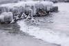 Mouettes (gisèlerichardet) Tags: lac léman glace mouettes froid vagues lake birds glacial vol blanc