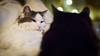20171224-_OSY8230 (VilleHoo) Tags: tallinn muuricahe muurivahe sauna koti hima home muutto vat cat kissa kissat