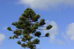 Cadix (hans pohl) Tags: espagne andalousie cadix nature arbres trees nuages clouds ciel sky