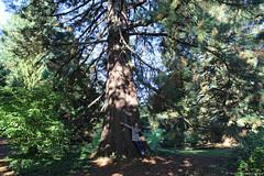 Heritage Tree (elianek) Tags: heritage trees tree sequoia park portland oregon forest floresta nature natureza eua usa estadosunidos unitedstates parque