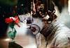 55-037 (ndpa / s. lundeen, archivist) Tags: nick dewolf nickdewolf photographbynickdewolf 1970s color 35mm film 55 reel55 boston massachusetts ma beaconhill evening people audience onlookers multipleexposure doubleexposure mime makeup facepaint 1974 youngpeople flower 1973