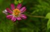 DSC00795a (m.dawier) Tags: indonesia a230 wallpaper flower newbie