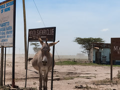 4-07012016-P1030754 (suzanne.mongrain) Tags: 2016 afrique baringo kenya masaimara paysage route