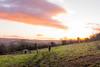 18/365 (Ursule Gaylard) Tags: 365project selfportrait photographychallenge sunrise winterskies pink
