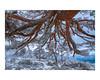 (david Ramalleira) Tags: davidramalleiraphotography davidramalleira d700 nikon landscape landscapes winter snow nieve invierno nature naturaleza natureart naturephotography naturesfinest naturesart natura tree trees árbol árboles
