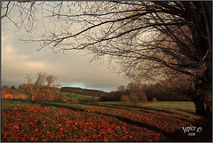 Back Catalogue... (Picture post.) Tags: landscape nature green willow trees fields winter sunlight shadows paysage arbre hdr clouds bluesky