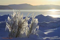 Frozen (JaanaMarja) Tags: iceland kleifarvatn lake sunlight snow frost frozen trees mountains ice iceformations sun