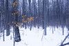 Winter - Fire and Ice (jim2302) Tags: forest awenda provincial park tree fire ice autumn color colours snow trees frozen wood woods winter is coming winteriscoming got game thrones gameofthrones