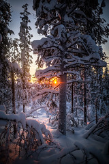 Jyppyrä (Lynniha) Tags: landscape finland suomi visitfinland visitlapland lapland north cold snow winter trees forest sun frozen travel neige froid hivers scandinavie scandinavia