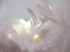 D R E A M C A T C H E R (Vivi Black) Tags: theme bokeh macro feather white monochrome macromondays
