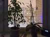 Winter's miniature (Sergey Tchernykov) Tags: korolev moscow region russia russland venaja rusia koroljov evening february 2018 февраль королёв московская область зимний white frozen freez snow col colden towers home block hus huset dormitory area twilight highlight detaches once natt nat dom haus casa hygge good free atmosphere хюгге kveld kvelden ilta flowers ice