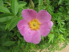 Flower (Itinerant Wanderer) Tags: fredericksburg battlefield civilwar nationalmilitarypark virginia