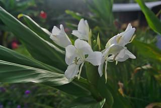 New flower 2
