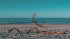 sea snake (Buecherkoenig) Tags: ostsee 2018 winter deutschland germany norddeutschland ostdeutschland nikon d7200 februar mecklenburgvorpommern february balticsea baltic wasser water meer sea küste strand beach