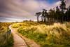 Curracloe Co Wexford. (Dec Roche) Tags: curracloe ravenswood wexford repofireland southeastireland nikond7200 nikon18105mm landscape forest beach