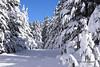 Silence ouaté (H..L) Tags: montagne pyrénées formiguère aude neige forêt arbre soleil froid hiver silence paix chemin livolsi nikon d5300
