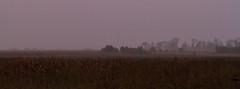 Dixon_JB_354_3749 (Joanne Bouknight) Tags: bunkhouse dixonwaterfowlrefuge illinois mist morning rain storm sunrise thewetlandsinstitute yard