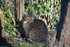 Neelix the Cat. (PhotoTJH) Tags: phototjh mackerel pattern makreel patroon tabby cat kat kater feline european shorthair europese korthaar cyperse cyper grijs grey neelix animal pet huisdier phototjhnl eye oog nose neus
