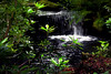Woodland Cascade (andycurrey2) Tags: water nature green tree trees river stream waterfall cascade pool woods forest canon