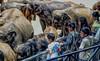 Elephant Orphanage (CosmoClick) Tags: elephants animalplanet