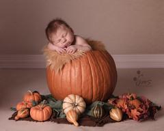 connor126sig (JMS1980) Tags: pumpkin baby babyinpumpkin newborn newbornphotography photography instudiophotography instudio studiolighting newbornsession fall littlepumpkin