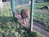 100_0168 (kevinrayworth) Tags: blackpoolzoo blackpool zoo