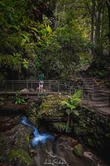 Blue Mountains (leonsidik.com) Tags: leon sidik fujifilm landscape blue mountains nsw newsouthwales australia sydney forest jungle river creek water green adventure instagram 2017