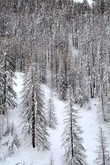 PIO_0544m (MILESI FEDERICO) Tags: milesi milesifederico montagna montagne mountain italia italy iamnikon inmontagna inverno ice wild winter piemonte piedmont visitpiedmont valsusa valliolimpiche valdisusa valledisusa sauzedicesana cittàmetropolitanaditorino freddo nikon nikond7100 nital natura nature nat neve nevicata snow 2018 gennaio alpi alpicozie altavallesusa altavaldisusa d7100 dettagli details paesaggio panorama landscape alberi albero ngc ngg europa europe explorer