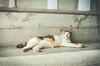 悠閒午後 | 侯硐 (Jack_Wei) Tags: cat afternoon animal laidback 動物 貓 侯硐 悠閒 台灣 新北市 瑞芳