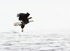 Piercing the Mississippi Mist (TroyMarcyPhotography.com) Tags: 20windchill action americanbaldeagle beautiful bird canon400mmf56l canon7d cloudy illinois iowa january mississippiriverbaldeagles2018 overcast cold nature wildlife