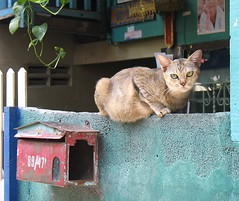 cat on a wall (the foreign photographer - ฝรั่งถ่) Tags: cat wall top khlong thanon bangkhen bangkok thailand canon