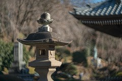 _DSC9397 (kymarto) Tags: bokeh bokehlicious bokehphotography dof depthoffield beauty beautiful sony sonyphotography sonya7r2 oldlens vintagelens japan buddhist temple religion lantern cyclop