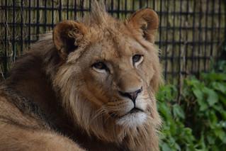 Aslan @ Stichting Leeuw 22-04-2017