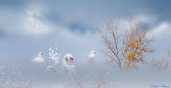 Rêverie (Didier HEROUX) Tags: photoshop cygne animaux retouche cc arbre tree ciel nuage painting eau didierheroux herouxdidier création blanc lac composition montage annecy creative flickr digital texture raw art france french rêve imagination nature manipulation zzmanipulation