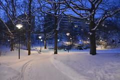 < evening blue with lighting > (Mister.Marken) Tags: blueevening park snow winter larsboda nikond5200 lighting blue evening