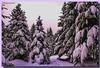 Col du Rothlach (champ du feu) (jamesreed68) Tags: rothlach nature 67 canon eos 600d alsace basrhin france neige hiver