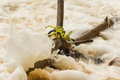 Scraps of Rope (CanonDLee) Tags: bahamas caribbean crashing dynamic frayed garbage halfmooncay island line litter ocean polution rope sea ship strand strands trash travel water wave waves