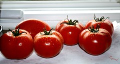 These were already cut for the pepper steak dinner to night (Lynn English) Tags: tomatoes ledge window water droplets coth5 macromondays